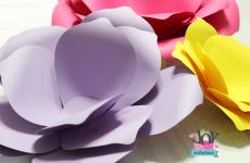 Flores vídeo